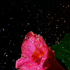 flower in rainy day by Sarol Glider - Nature Up Close Flowers - 2011-2013
