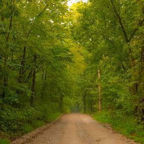 Back Road by Jennifer  Loper  - Nature Up Close Trees & Bushes ( green, leaves, road, dirt, trees )
