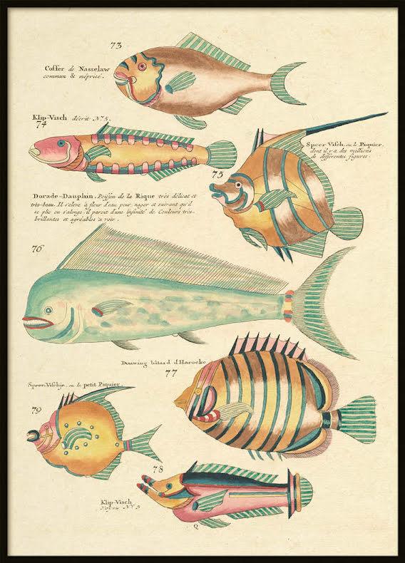 Vintage Fishes 6, Poster