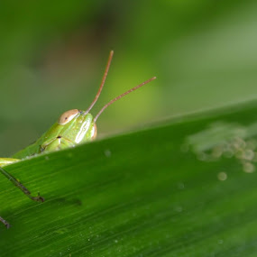 spy by Firdian Rahmatulah - Animals Insects & Spiders