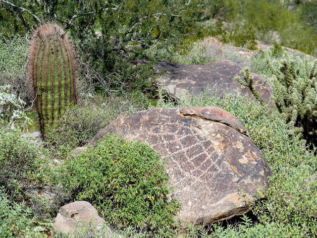 Cactus and petroglyph