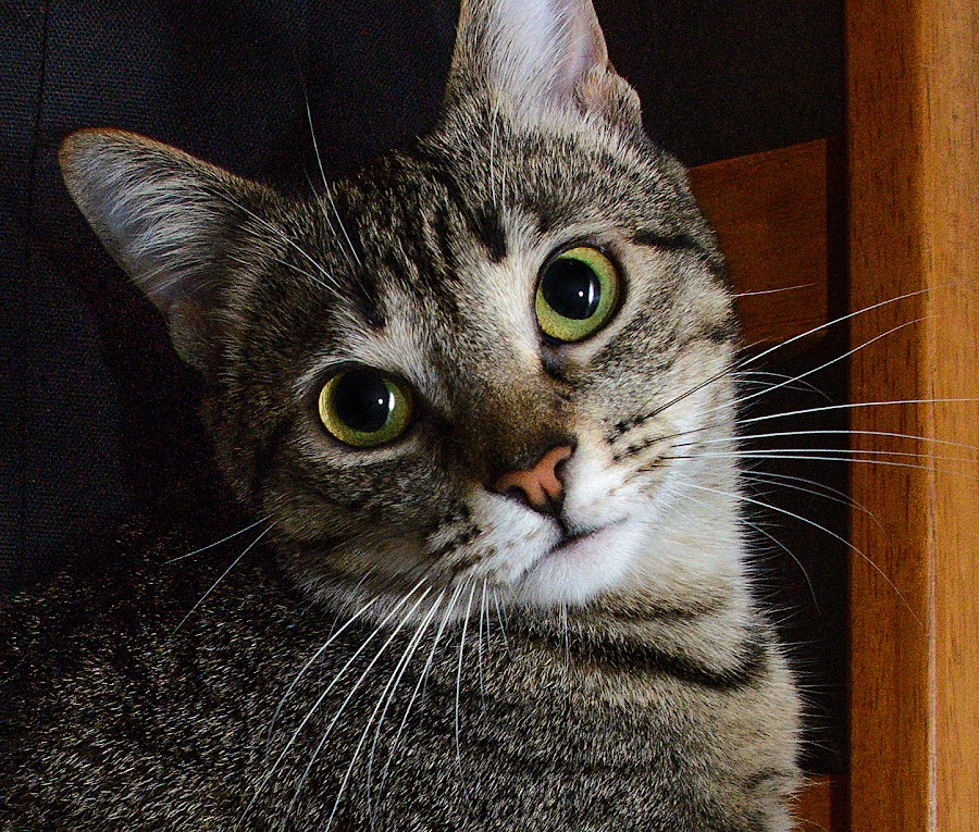 by Courtland Roberts - Animals - Cats Portraits