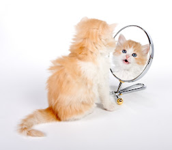 Photo: Six weeks old kitten looking in a mirror