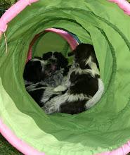 Photo: die 3-er Meute treibt ihr Unwesen im Tunnel