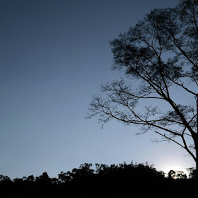 Before Night by Rafael Jatiaji - Landscapes Sunsets & Sunrises ( nature, tree, night, landscape, shillouette )