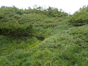 山頂の池塘