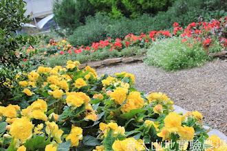 Photo: 拍攝地點: 梅峰-溫帶花卉區 拍攝植物: 球根秋海棠 拍攝日期:2012_08_30_FY