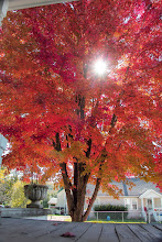 Photo: From my front porch Sunday October 27th, 2013