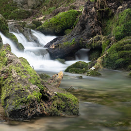 Log in Stream by Darrell Evans - Nature Up Close Water ( yorkshire, cliff, countryside, janet's foss, pool, water, outdoor, environment, falls, yorkshire dales, rocks, malham, waterfall, landscape )
