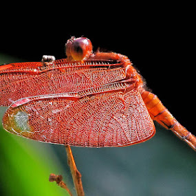 by Debashis Dey - Animals Insects & Spiders