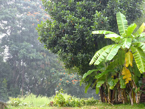 Photo: Tropical downpour.