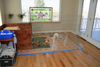 Photo: This is her new area. Sleep area, play area and potty area, lots of windows. Our kitchen is where I'm standing and the family room starts after the patio doors.