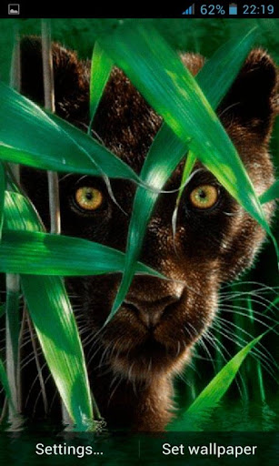 Forest Panther Live Wallpaper