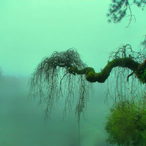 by Ed  von Ems - Nature Up Close Trees & Bushes