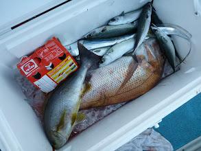 Photo: 釣果写真です。 オカモトさんの真鯛3kgオーバーですね! おっ!タチウオも入りましたかー!