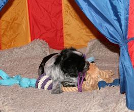 Photo: Ellie hat 'ihr' Spielzeug im Zelt gebunkert