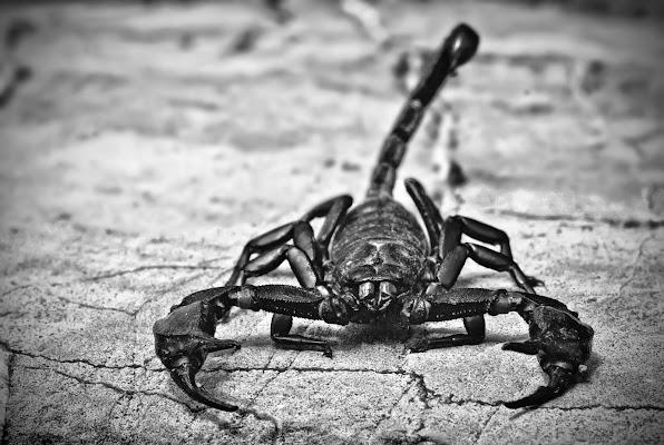 Scorpion di Patrix