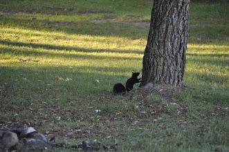 Photo: Squirrel