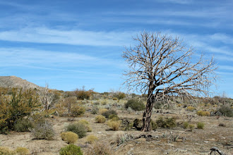 Photo: A solitary and unhealthy looking tree