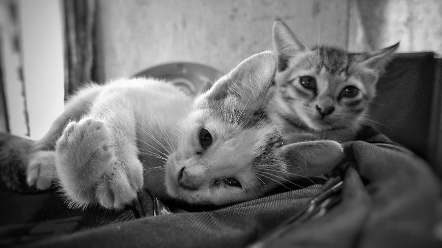 inoccence by Bitupan Das - Animals - Cats Kittens (  )