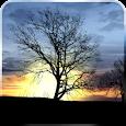 Silhouette Free Live Wallpaper icon