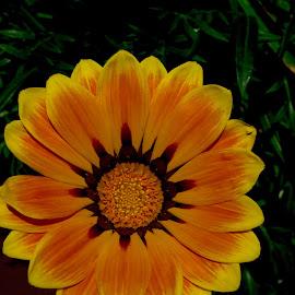 flower by Janette Ho - Instagram & Mobile iPhone (  )