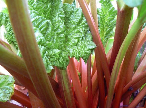W D's Rhubarb Sauce Recipe