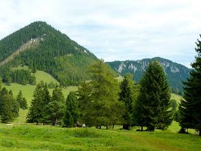 Photo: ... und den Öhler (1183m)! Ja, ich (mit 5 anderen) will! Die meisten anderen nehmen den Imitzerweg (rot, 201, 231).