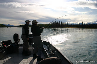 Photo: Fighting a Kenai rainbow trout out of a 20 ft Willie Predator power boat.