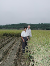 Photo: Liu Zhibin showing Norman Uphoff one of his SRI fields. Picture taken in 2004. [Photo by Norman Uphoff]