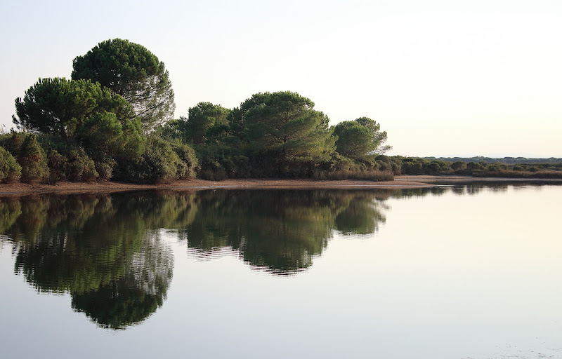 Lo specchiarsi della pineta sull'acqua al calar del sole di roberto_rusticali