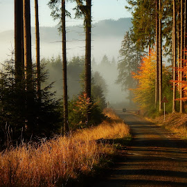 Forest Road by Sona Gerekova - Landscapes Forests ( mountains, nature, fog, forest, road, landscape, morning )