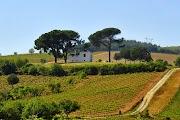 Пейзажи до боли напоминают Тоскану