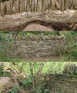 Dry stone wall built beside ash die back tree stump in Hawling UK