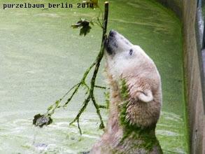 Photo: Hoch mit dem Ast ;-)