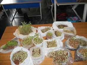 Photo: Garden in the Classroom