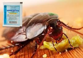 борьба с тараканами борной кислотой