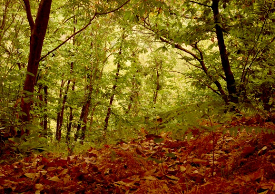 Contrasti d'autunno di bibou