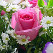 Nice Flower Wallpapers