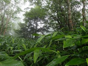 背丈高の笹薮