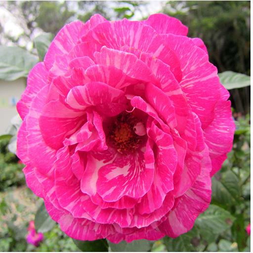 1031花のライブ壁紙 娛樂 App LOGO-APP試玩