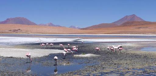 Flamingo társkereső oldal
