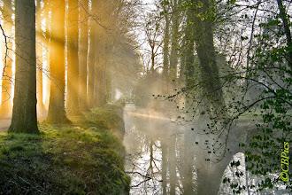 Photo: Landschappen Ochtendnevel. Foto: Cees Boom.