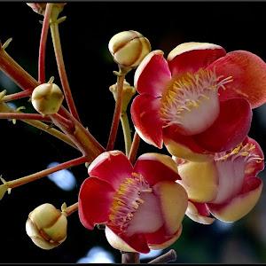 flowerBadamFarnRoadxx.jpg