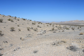 Photo: AE8 Cymopterus collection site with tracks nearby