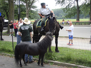 Photo: Chocolate Chip meets a NYC Parks Enforcement Patrol Horse