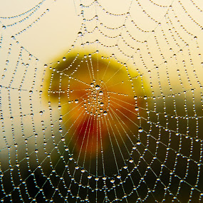 by Babor Ali Khan - Nature Up Close Webs (  )