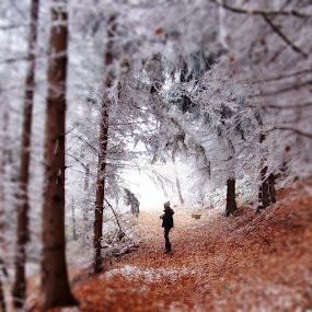 Jasna's Forest by Jadranka Bužimkić - Landscapes Forests