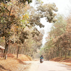 Dry and Dusty by Sugiarto Widodo - Landscapes Forests ( motorcycle, motorbike, rubber trees, road, dry, forrest, dust )