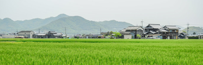 Photo: A rice field in the town of Chayamachi, Okayama Prefecture